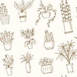 Seamless pattern plants in a pot Hand drawn doodle sketch illustration. Seamless pattern plants in a pot Hand drawn doodle vector sketch illustration Royalty Free Stock Image