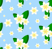 Seamless pattern of plumeria flowers Royalty Free Stock Image