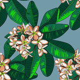 Seamless Pattern with plumeria Flowers and Frangipani. Royalty Free Stock Photos