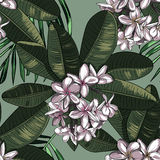 Seamless Pattern with plumeria Flowers and Frangipani. Royalty Free Stock Images