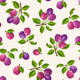 Seamless pattern with plums. Vector illustration. Vector seamless pattern with ripe branches of plums Stock Photo