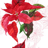 Seamless pattern  with poinsettia plant-03 Stock Photos