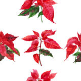 Seamless pattern  with poinsettia-02 Stock Image