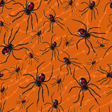 Seamless pattern with poisonous spiders Royalty Free Stock Images