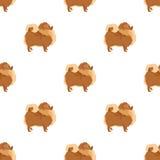 Seamless pattern Pomeranian Geometric style Stock Photo