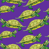 Seamless pattern Pond slider turtle green smiling vector illustr Stock Photography
