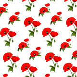 Seamless pattern with poppies flowers Stock Photos