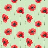 Seamless pattern with poppies on green, hand drawn illustration royalty free illustration