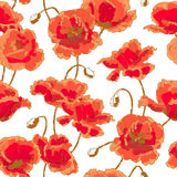 Seamless pattern with poppy Royalty Free Stock Images