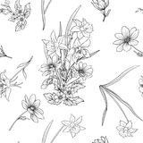Seamless pattern with poppy flowers daffodil, anemone, violet in Royalty Free Stock Images
