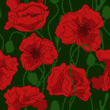 Seamless pattern of poppy flowers Stock Images