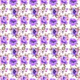 Seamless pattern with Poppy and Gerber flowers. Watercolor illustration Royalty Free Stock Image