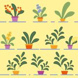 Seamless Pattern of Potted Flowering House Plants. Seamless Pattern of Various Potted Flowering House Plants on Shelves on Yellow Background. Homeplants, Floral vector illustration