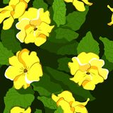 Seamless pattern with primrose flowers and leaves stock illustration