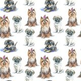 Seamless pattern of a pug puppy,Yorkshire Terrier and dachshund puppy. Royalty Free Stock Photo