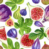 Seamless pattern of purple and green figs and leaves painted wit Royalty Free Stock Photos