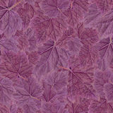 Seamless Pattern. Purple Leaf Geyer Isolated on white background. Royalty Free Stock Image