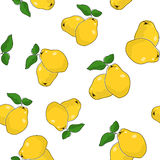 Seamless Pattern of  Quince Stock Images
