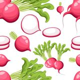 Seamless pattern radish with a bundle of leaves useful vegetables flat style fresh food  illustration on white background we. B site page and mobile app design Stock Image