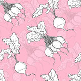 Seamless pattern with radish. Vector illustration for your design Stock Photography