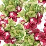 Seamless pattern of radish watercolor Royalty Free Stock Photography