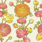Seamless pattern - ranunculus Stock Images