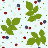 Seamless pattern with raspberries, blackberries and green leaves on a white field. Stock Photography