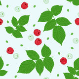 Seamless pattern with raspberries and green raspberry leaves on a white field. Stock Images