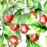 Seamless pattern with Raspberry Stock Photos