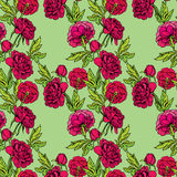 Seamless pattern with Realistic graphic Peony flowers - hand dra Stock Images