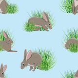 Seamless pattern. Realistic hares in green grass. Spring in Europe and America vector illustration