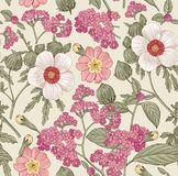 Seamless pattern. Realistic isolated flowers. Vintage background heliotrope hibiscus primavera hibisc Drawing engraving Vector Royalty Free Stock Photos