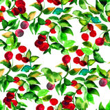 Seamless pattern with red berry. Watercolor illustration Stock Photos