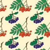 Seamless pattern with red and black rowan berries. Hand drawn seamless pattern with chokeberries, red rowan berries and green leaves, sketch vector illustration Stock Images