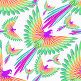 Seamless pattern red Caribbean parrot flying.. Seamless pattern red Caribbean parrot flying vector illustration Royalty Free Stock Image