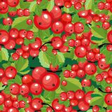Seamless pattern red currant Royalty Free Stock Photos