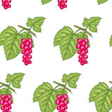 Seamless pattern with Red currant berries Stock Image