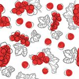Seamless pattern of red currant fruit. White background with red currant berries. Best for design of food packaging juice breakfas. T, cosmetics, tea, detox royalty free illustration