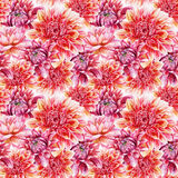 Seamless pattern with red dahlia. Royalty Free Stock Images