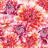 Seamless pattern with red dahlia. Royalty Free Stock Photos