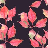 Seamless pattern with red leaves on the dark background. Watercolor vector illustration