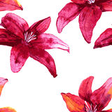 Seamless pattern with red lily flowers Stock Images