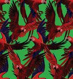 Seamless pattern with red macaws flying. Hand Stock Image