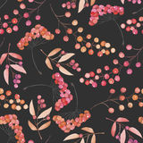 Seamless pattern with the red and orange berries, hand drawn in a watercolor on a dark background Stock Photography