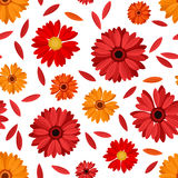 Seamless pattern with red and orange gerbera flowe Royalty Free Stock Photography