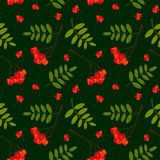 Seamless pattern with red and orange Rowan berries and leaves. Vector illustration. Dark green background. Stock Photography