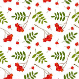 Seamless pattern with red and orange Rowan berries and leaves. Vector illustration. Stock Photos