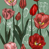 Seamless pattern with red and pink tulip flowers Stock Photo