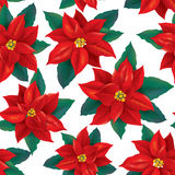 Seamless pattern of red Poinsettia Royalty Free Stock Photography