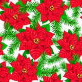 Seamless pattern of Poinsettia and spruce branch. Seamless pattern of red Poinsettia and spruce branch Royalty Free Stock Photos